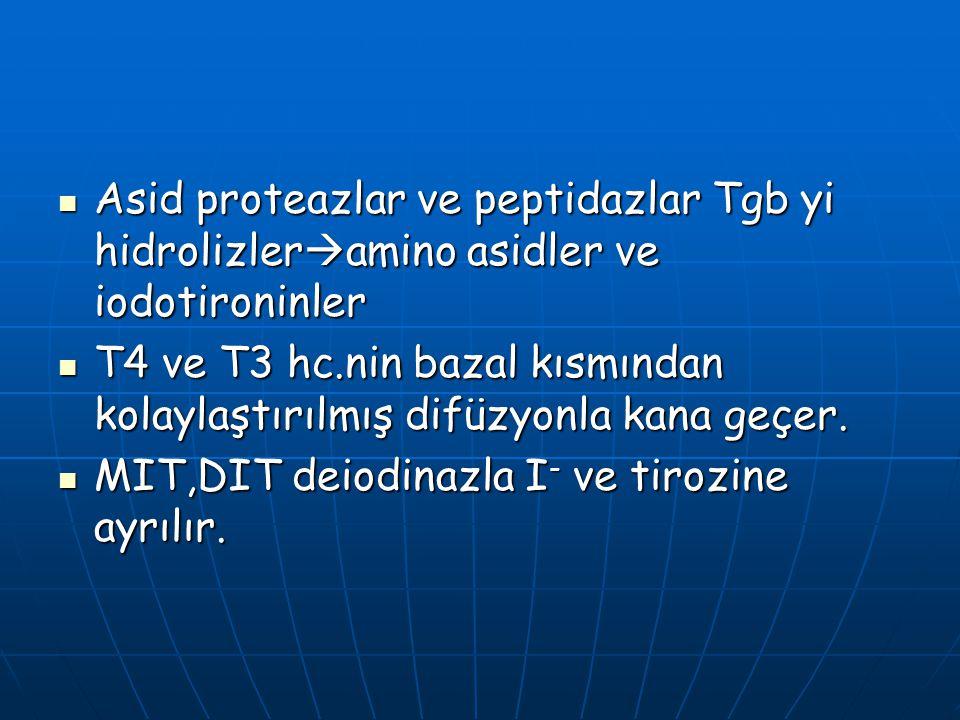 Asid proteazlar ve peptidazlar Tgb yi hidrolizler  amino asidler ve iodotironinler Asid proteazlar ve peptidazlar Tgb yi hidrolizler  amino asidler