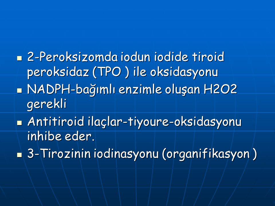 2-Peroksizomda iodun iodide tiroid peroksidaz (TPO ) ile oksidasyonu 2-Peroksizomda iodun iodide tiroid peroksidaz (TPO ) ile oksidasyonu NADPH-bağıml
