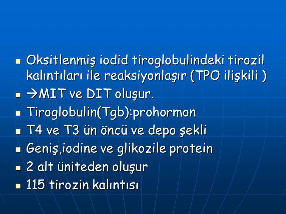 Oksitlenmiş iodid tiroglobulindeki tirozil kalıntıları ile reaksiyonlaşır (TPO ilişkili ) Oksitlenmiş iodid tiroglobulindeki tirozil kalıntıları ile r