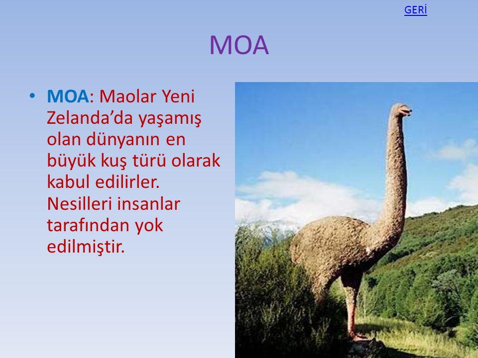 MOA MOA: Maolar Yeni Zelanda'da yaşamış olan dünyanın en büyük kuş türü olarak kabul edilirler. Nesilleri insanlar tarafından yok edilmiştir. GERİ