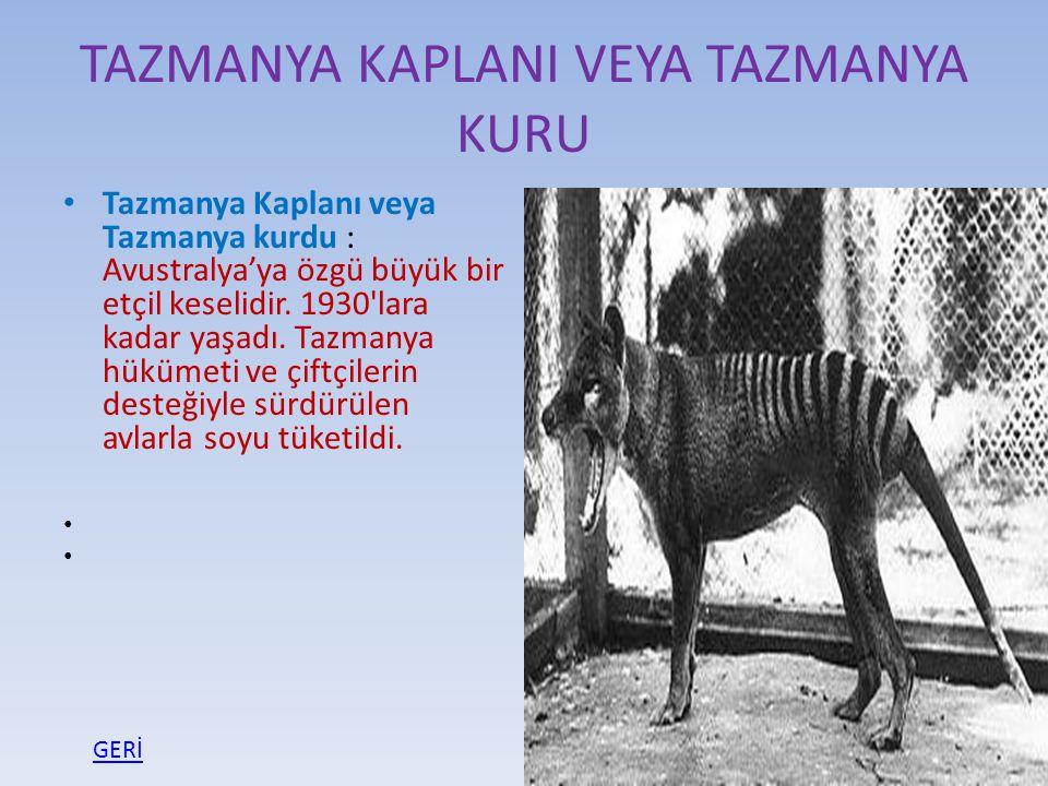 TAZMANYA KAPLANI VEYA TAZMANYA KURU Tazmanya Kaplanı veya Tazmanya kurdu : Avustralya'ya özgü büyük bir etçil keselidir. 1930'lara kadar yaşadı. Tazma