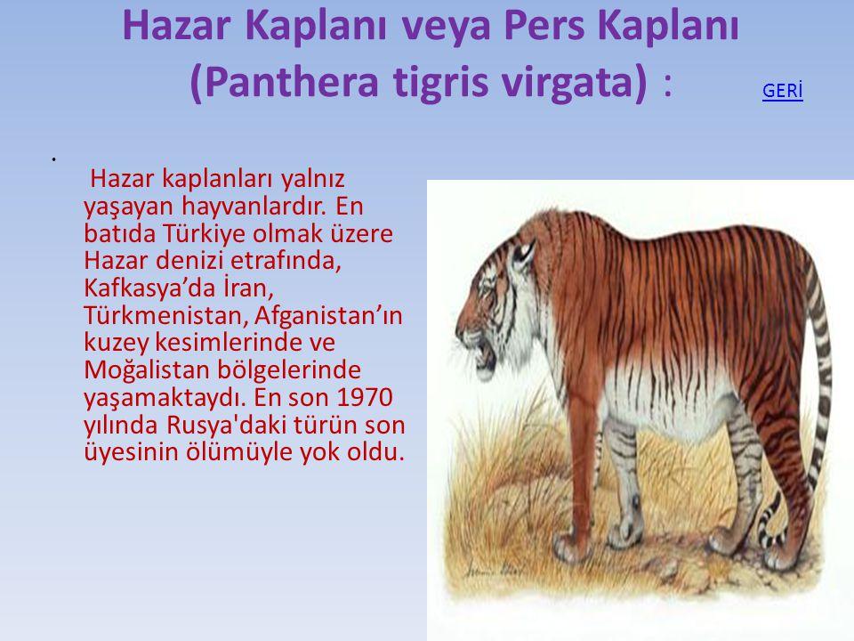 Hazar Kaplanı veya Pers Kaplanı (Panthera tigris virgata) : Hazar kaplanları yalnız yaşayan hayvanlardır. En batıda Türkiye olmak üzere Hazar denizi e