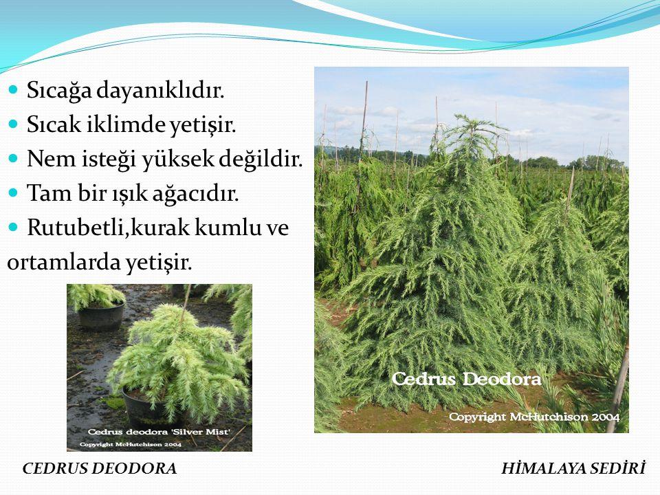Sıcağa dayanıklıdır. Sıcak iklimde yetişir. Nem isteği yüksek değildir. Tam bir ışık ağacıdır. Rutubetli,kurak kumlu ve ortamlarda yetişir. CEDRUS DEO