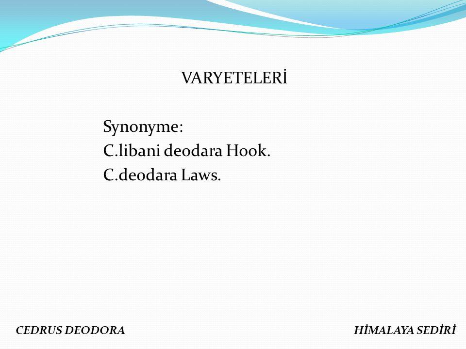 VARYETELERİ Synonyme: C.libani deodara Hook. C.deodara Laws. CEDRUS DEODORA HİMALAYA SEDİRİ