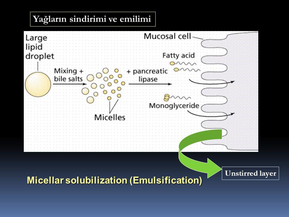 Micellar solubilization (Emulsification) Unstirred layer Yağların sindirimi ve emilimi