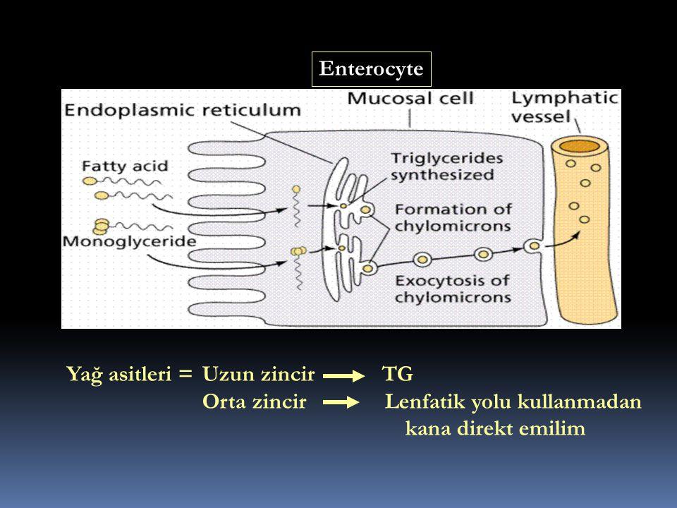 Yağ asitleri = Uzun zincir TG Orta zincir Lenfatik yolu kullanmadan kana direkt emilim Enterocyte