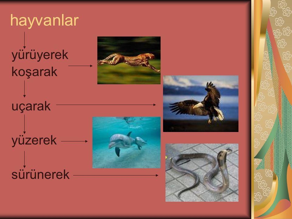 hayvanlar yürüyerek koşarak uçarak yüzerek sürünerek