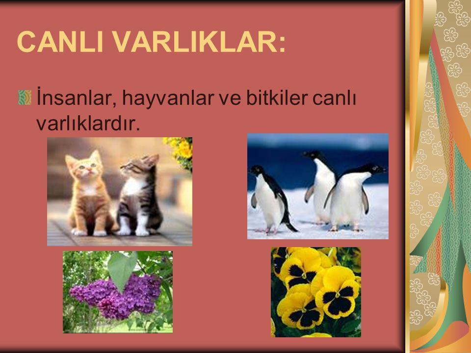 CANLI VARLIKLAR: İnsanlar, hayvanlar ve bitkiler canlı varlıklardır.