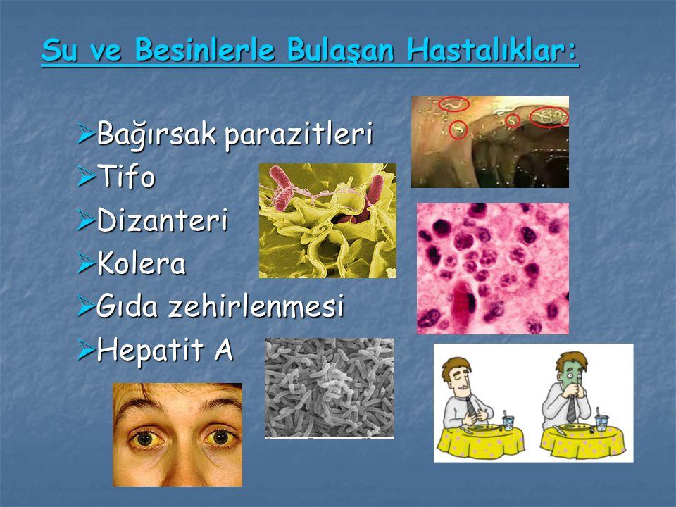 Su ve Besinlerle Bulaşan Hastalıklar:  Bağırsak parazitleri  Tifo  Dizanteri  Kolera  Gıda zehirlenmesi  Hepatit A