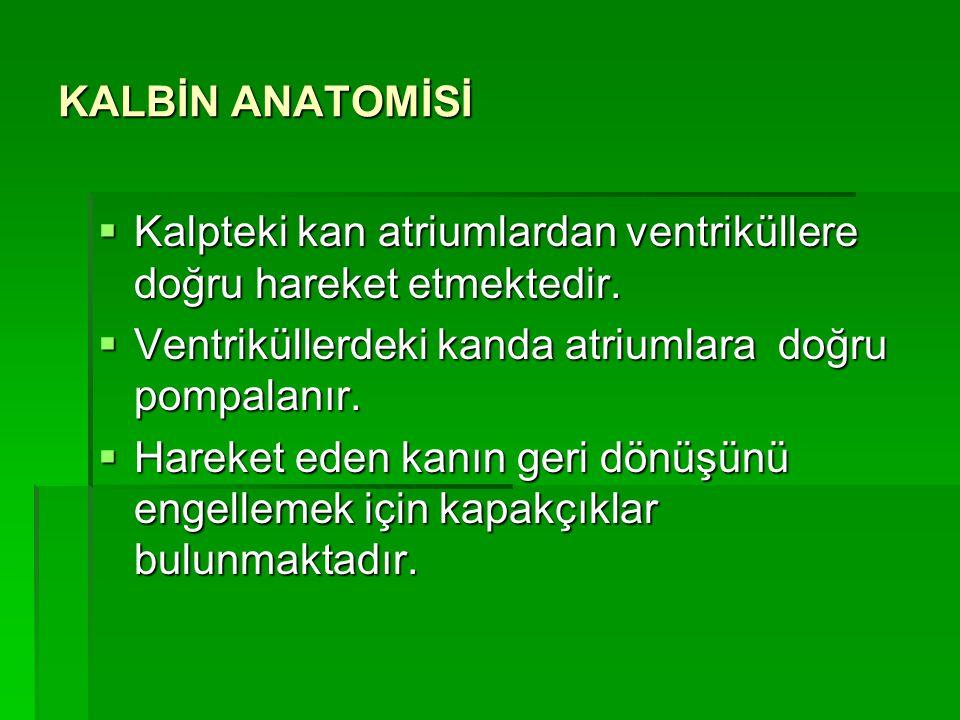 KALBİN ANATOMİSİ  Atriumlar kanı arter adı verilen ve oksijenden zengin kanı taşıyan damarlara pompalarken,  Ventriküller kanı ven adı verilen ve ok