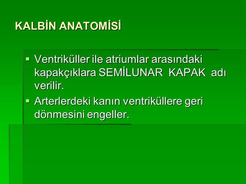 KALBİN ANATOMİSİ  Atriumlar ile ventriküller arasındaki kapakçıklara ATRİOVENTRİKÜLER KAPAK denir.  Ventriküllerdeki kanın atriumlara geri dönmesini