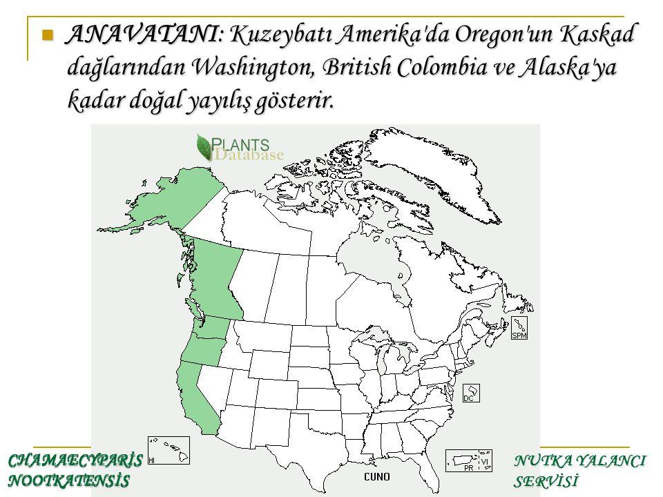 ANAVATANI: Kuzeybatı Amerika'da Oregon'un Kaskad dağlarından Washington, British Colombia ve Alaska'ya kadar doğal yayılış gösterir. ANAVATANI: Kuzeyb