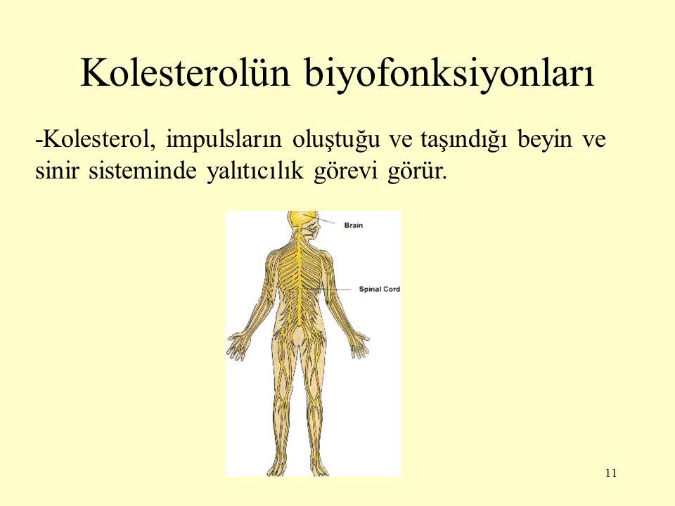 11 Kolesterolün biyofonksiyonları -Kolesterol, impulsların oluştuğu ve taşındığı beyin ve sinir sisteminde yalıtıcılık görevi görür.