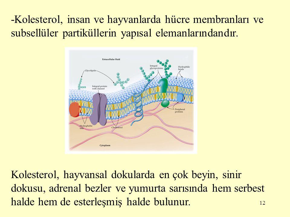 12 -Kolesterol, insan ve hayvanlarda hücre membranları ve subsellüler partiküllerin yapısal elemanlarındandır. Kolesterol, hayvansal dokularda en çok