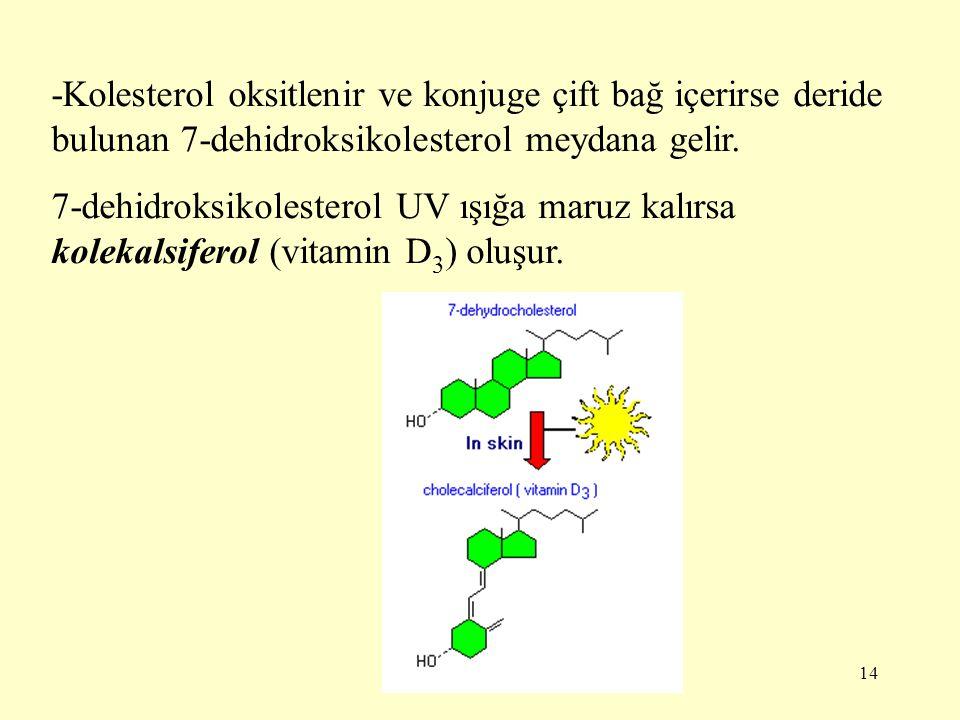14 -Kolesterol oksitlenir ve konjuge çift bağ içerirse deride bulunan 7-dehidroksikolesterol meydana gelir. 7-dehidroksikolesterol UV ışığa maruz kalı