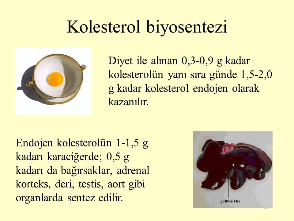 16 Kolesterol biyosentezi Diyet ile alınan 0,3-0,9 g kadar kolesterolün yanı sıra günde 1,5-2,0 g kadar kolesterol endojen olarak kazanılır. Endojen k