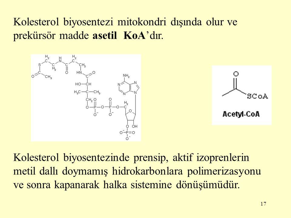 17 Kolesterol biyosentezi mitokondri dışında olur ve prekürsör madde asetil KoA'dır. Kolesterol biyosentezinde prensip, aktif izoprenlerin metil dallı
