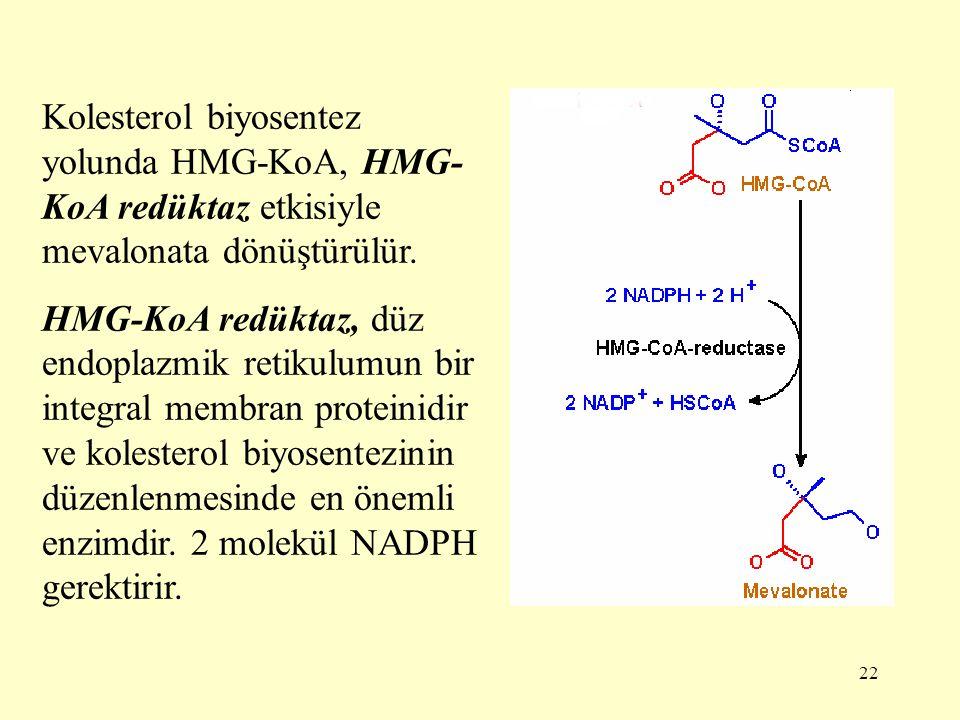 22 Kolesterol biyosentez yolunda HMG-KoA, HMG- KoA redüktaz etkisiyle mevalonata dönüştürülür. HMG-KoA redüktaz, düz endoplazmik retikulumun bir integ