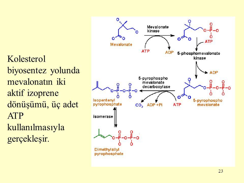 23 Kolesterol biyosentez yolunda mevalonatın iki aktif izoprene dönüşümü, üç adet ATP kullanılmasıyla gerçekleşir.