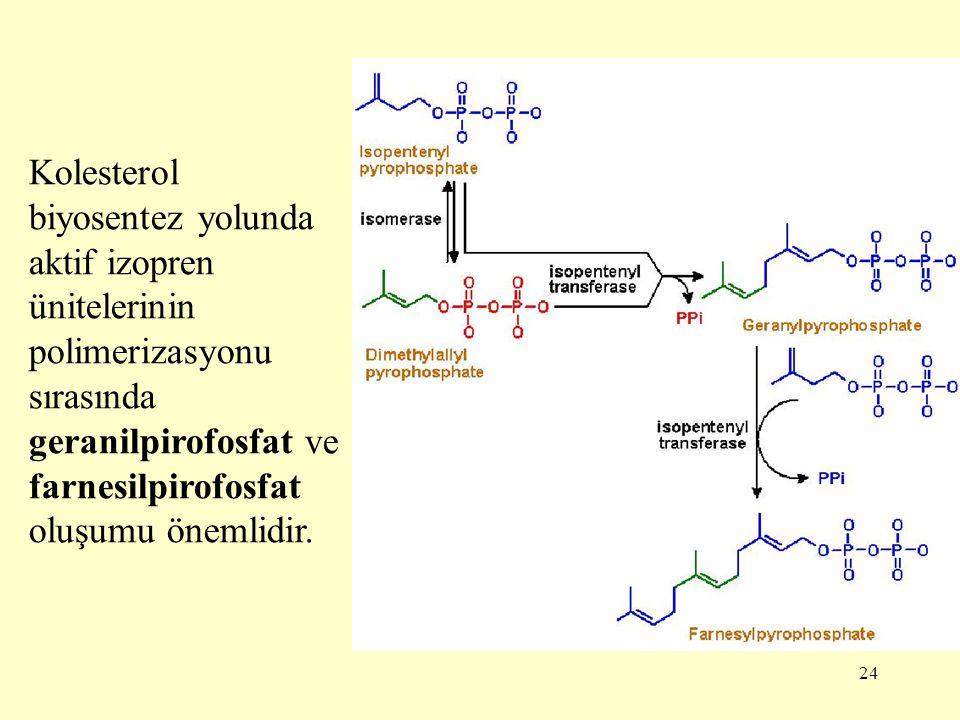 24 Kolesterol biyosentez yolunda aktif izopren ünitelerinin polimerizasyonu sırasında geranilpirofosfat ve farnesilpirofosfat oluşumu önemlidir.