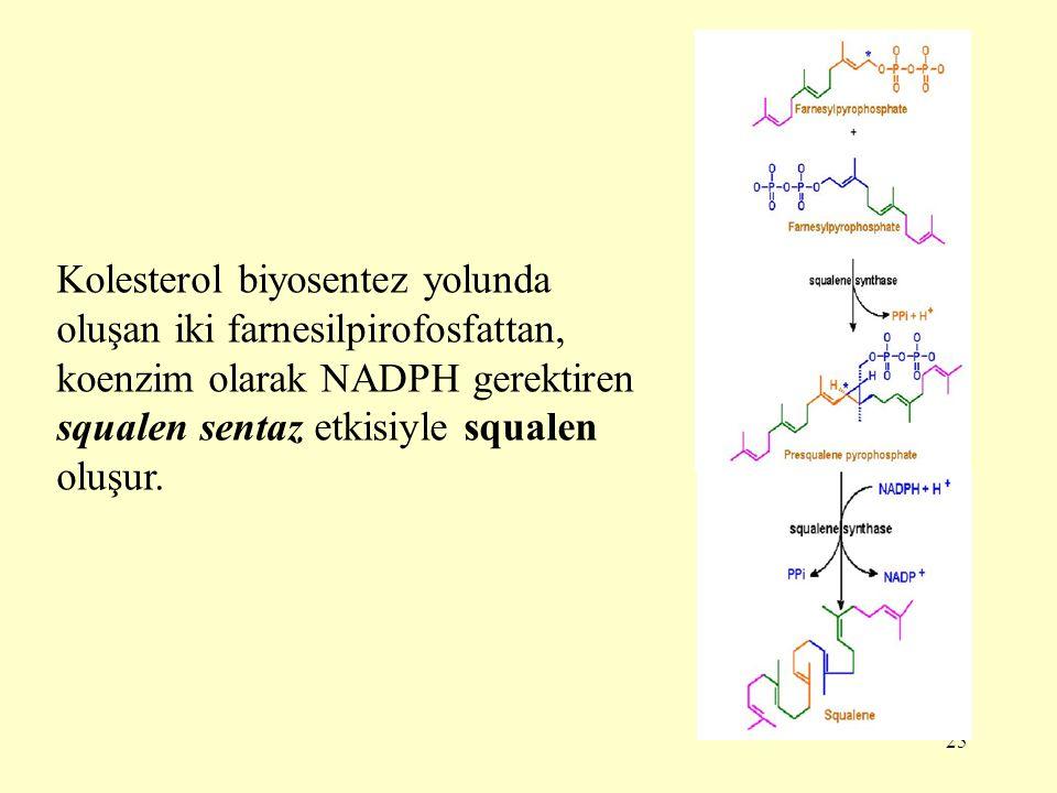 25 Kolesterol biyosentez yolunda oluşan iki farnesilpirofosfattan, koenzim olarak NADPH gerektiren squalen sentaz etkisiyle squalen oluşur.