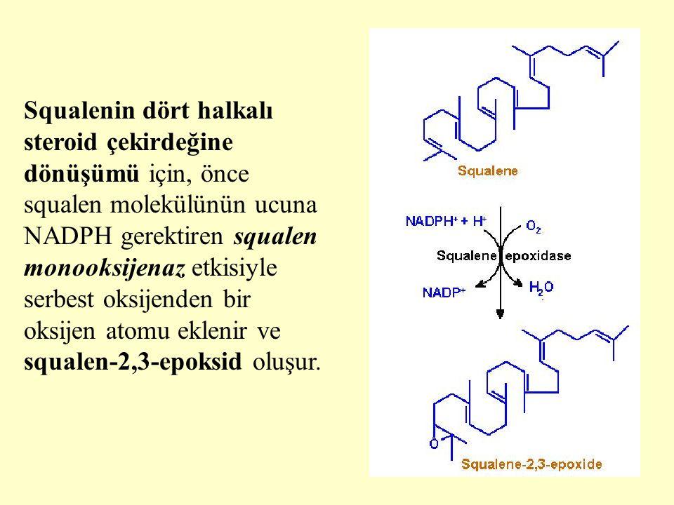 26 Squalenin dört halkalı steroid çekirdeğine dönüşümü için, önce squalen molekülünün ucuna NADPH gerektiren squalen monooksijenaz etkisiyle serbest o