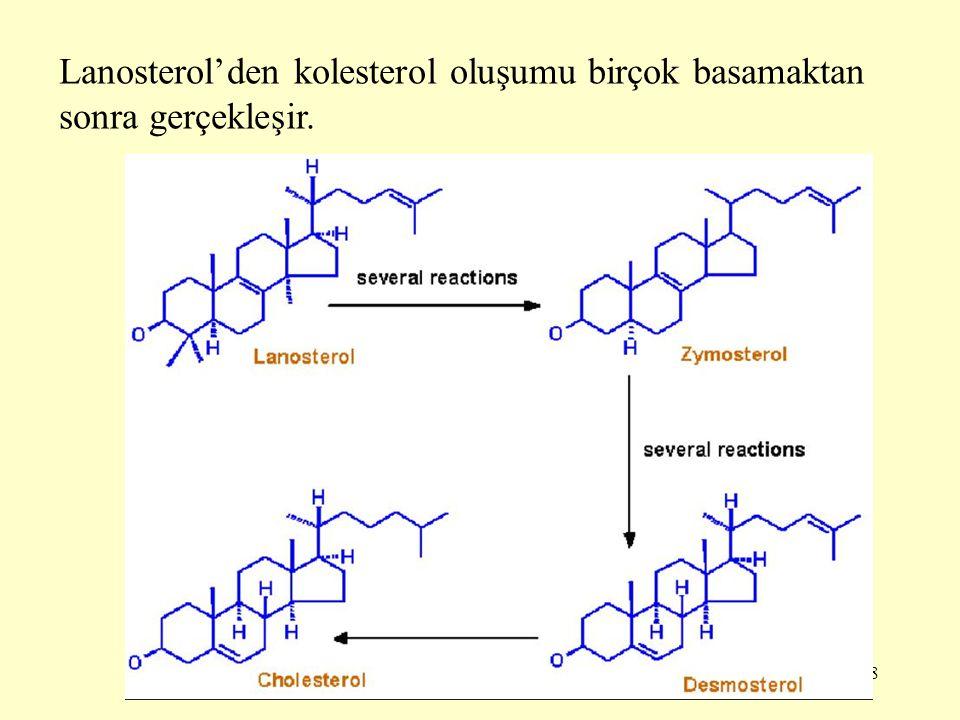 28 Lanosterol'den kolesterol oluşumu birçok basamaktan sonra gerçekleşir.