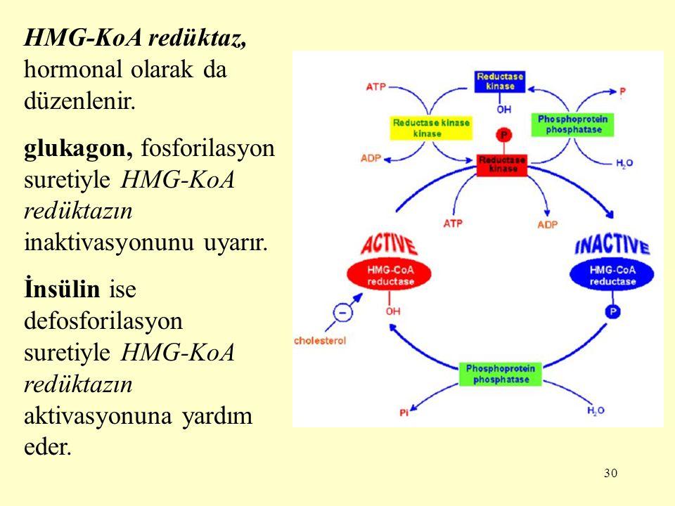 30 HMG-KoA redüktaz, hormonal olarak da düzenlenir. glukagon, fosforilasyon suretiyle HMG-KoA redüktazın inaktivasyonunu uyarır. İnsülin ise defosfori