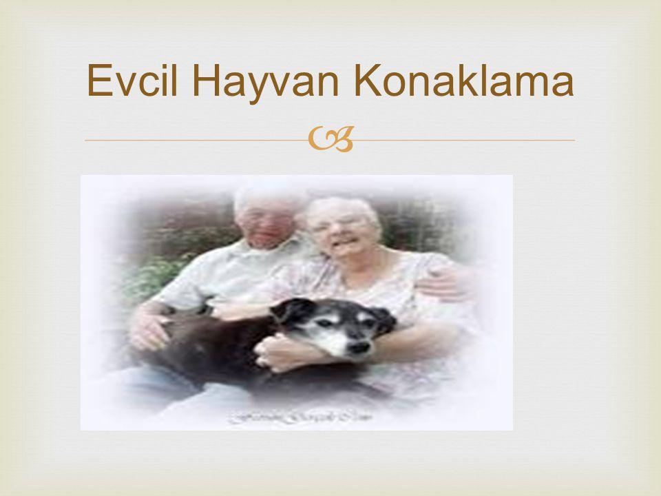  Evcil Hayvan Konaklama