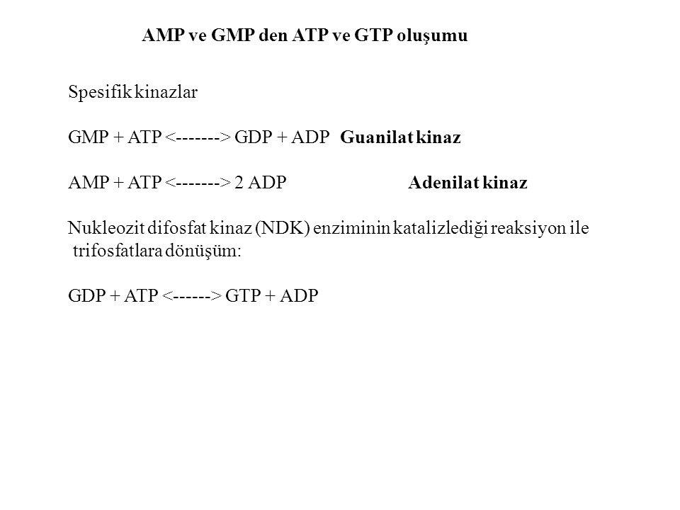 AMP ve GMP den ATP ve GTP oluşumu Spesifik kinazlar GMP + ATP GDP + ADP Guanilat kinaz AMP + ATP 2 ADPAdenilat kinaz Nukleozit difosfat kinaz (NDK) en