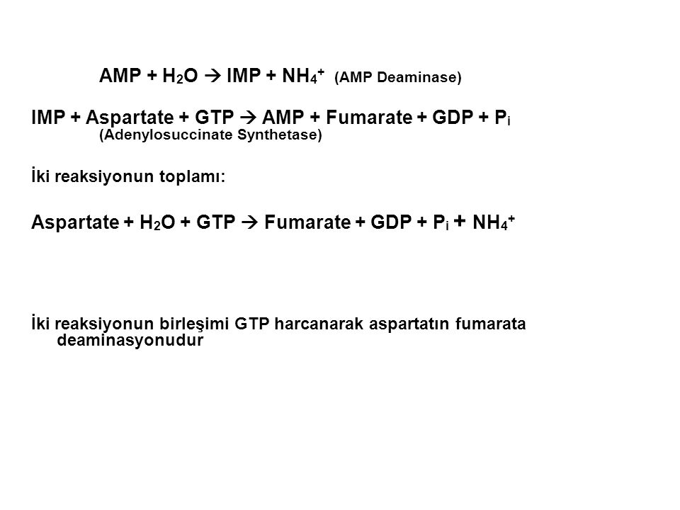 AMP + H 2 O  IMP + NH 4 + (AMP Deaminase) IMP + Aspartate + GTP  AMP + Fumarate + GDP + P i (Adenylosuccinate Synthetase) İki reaksiyonun toplamı: A