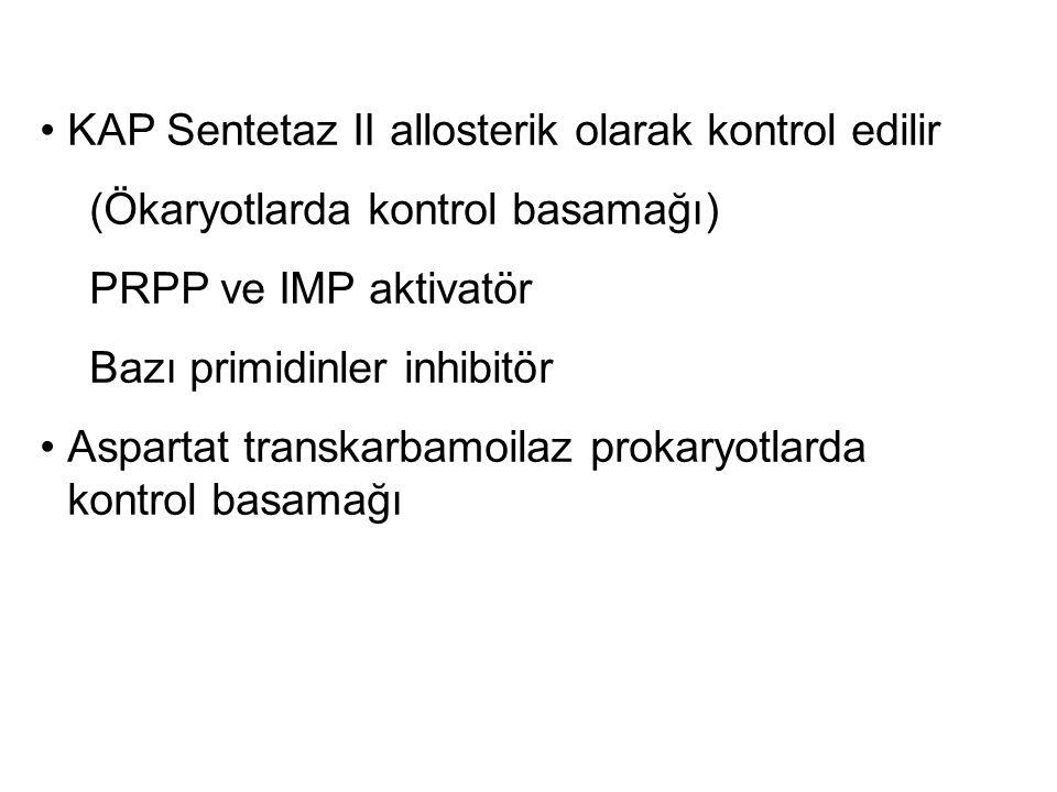 KAP Sentetaz II allosterik olarak kontrol edilir (Ökaryotlarda kontrol basamağı) PRPP ve IMP aktivatör Bazı primidinler inhibitör Aspartat transkarbam