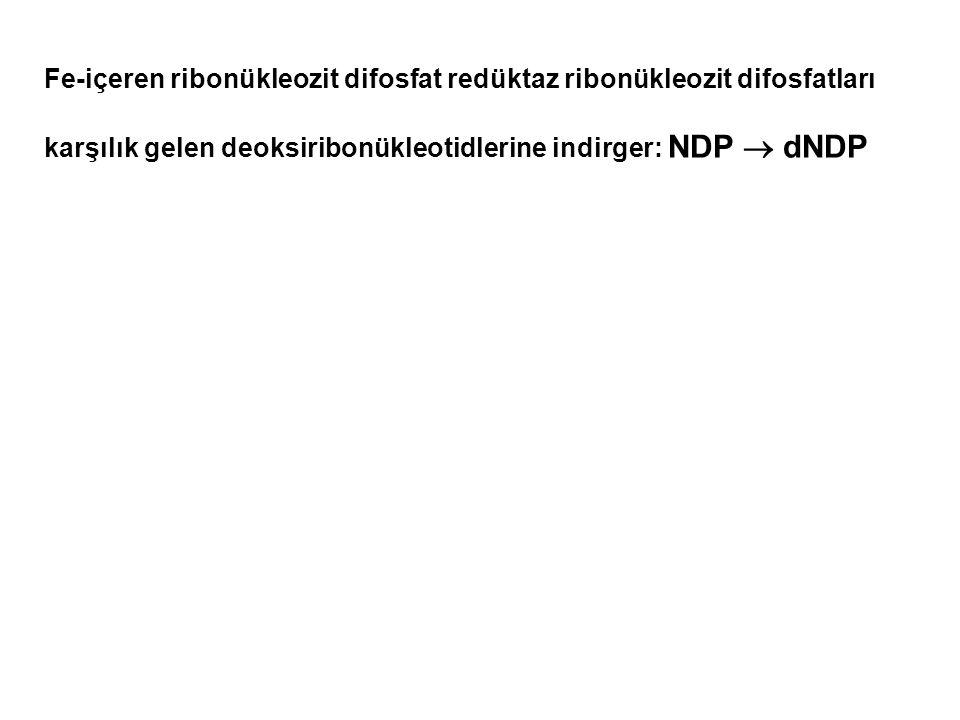 Fe-içeren ribonükleozit difosfat redüktaz ribonükleozit difosfatları karşılık gelen deoksiribonükleotidlerine indirger: NDP  dNDP