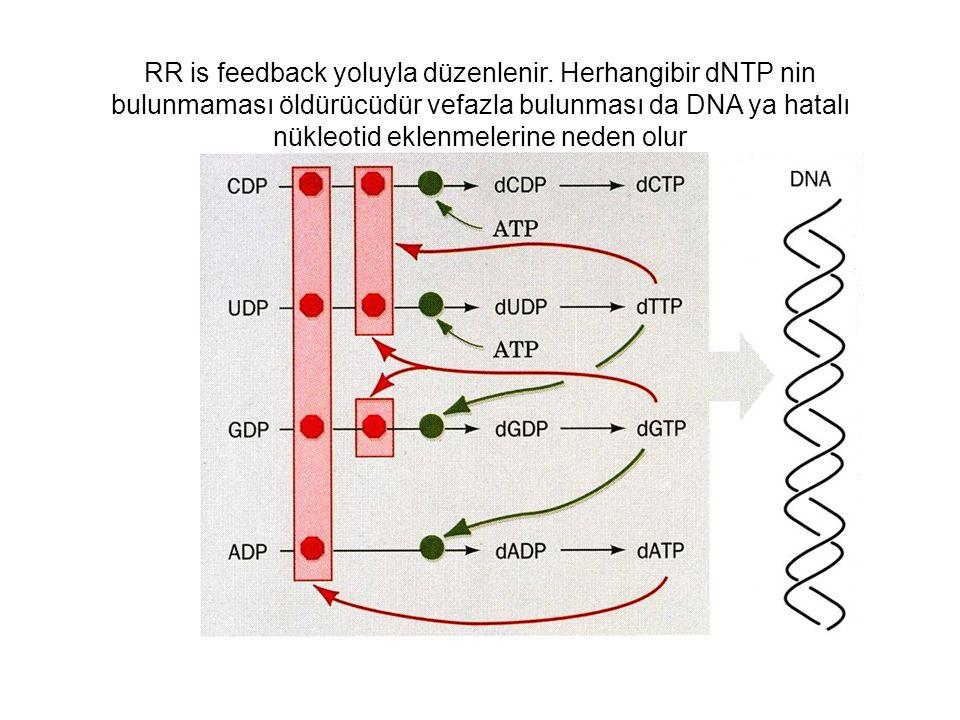 RR is feedback yoluyla düzenlenir. Herhangibir dNTP nin bulunmaması öldürücüdür vefazla bulunması da DNA ya hatalı nükleotid eklenmelerine neden olur