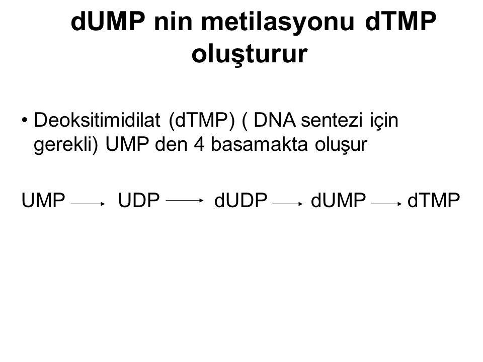 Deoksitimidilat (dTMP) ( DNA sentezi için gerekli) UMP den 4 basamakta oluşur UMPUDPdUDPdUMPdTMP dUMP nin metilasyonu dTMP oluşturur