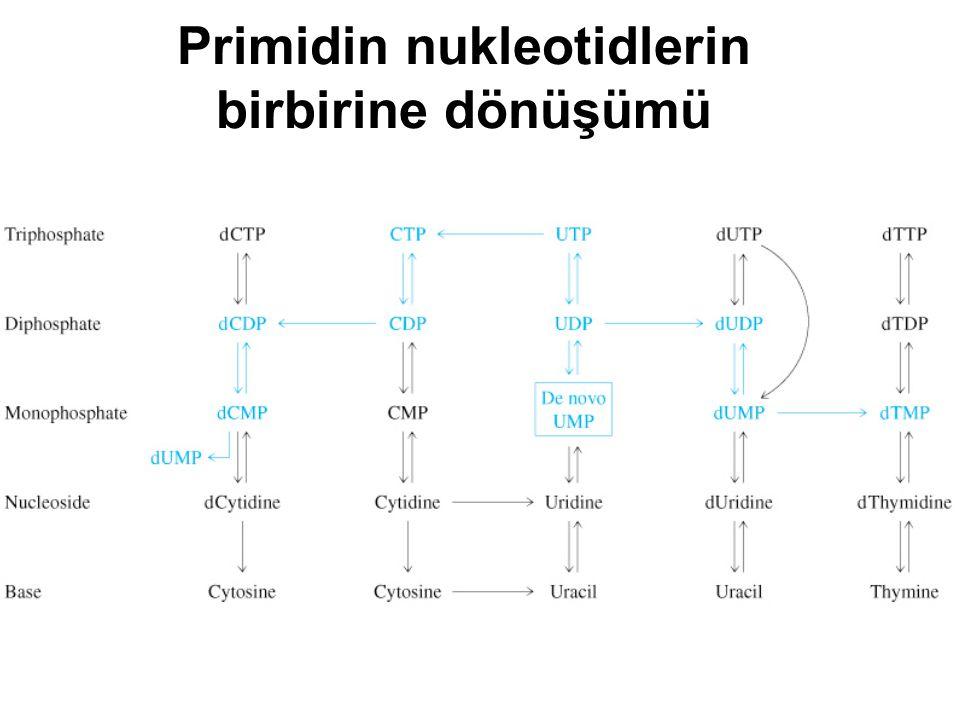 Primidin nukleotidlerin birbirine dönüşümü