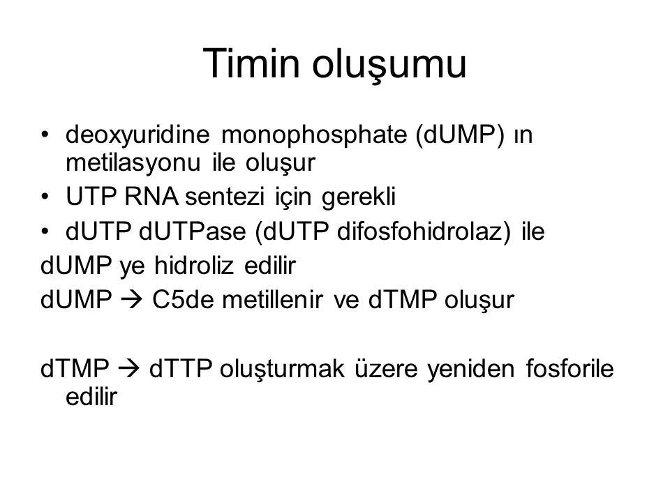 Timin oluşumu deoxyuridine monophosphate (dUMP) ın metilasyonu ile oluşur UTP RNA sentezi için gerekli dUTP dUTPase (dUTP difosfohidrolaz) ile dUMP ye