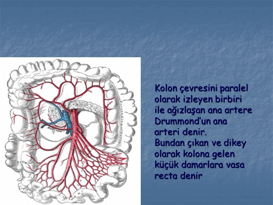 Kolon çevresini paralel olarak izleyen birbiri ile ağızlaşan ana artere Drummond'un ana arteri denir. Bundan çıkan ve dikey olarak kolona gelen küçük