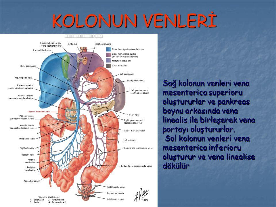 KOLONUN VENLERİ Sağ kolonun venleri vena mesenterica superioru oluştururlar ve pankreas boynu arkasında vena linealis ile birleşerek vena portayı oluş
