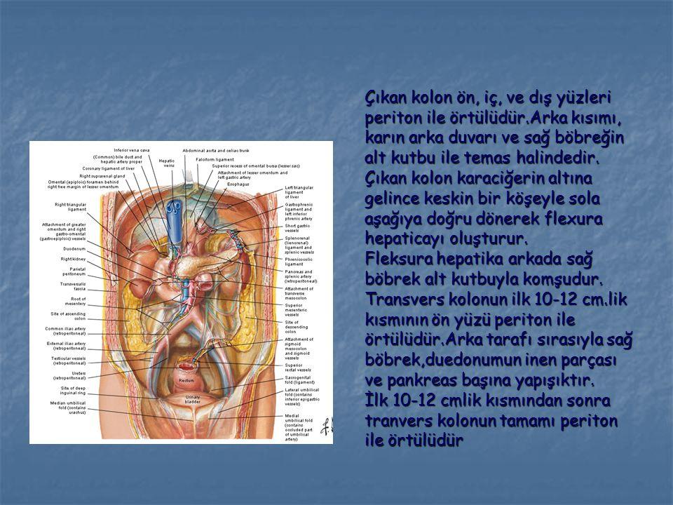Çıkan kolon ön, iç, ve dış yüzleri periton ile örtülüdür.Arka kısımı, karın arka duvarı ve sağ böbreğin alt kutbu ile temas halindedir. Çıkan kolon ka