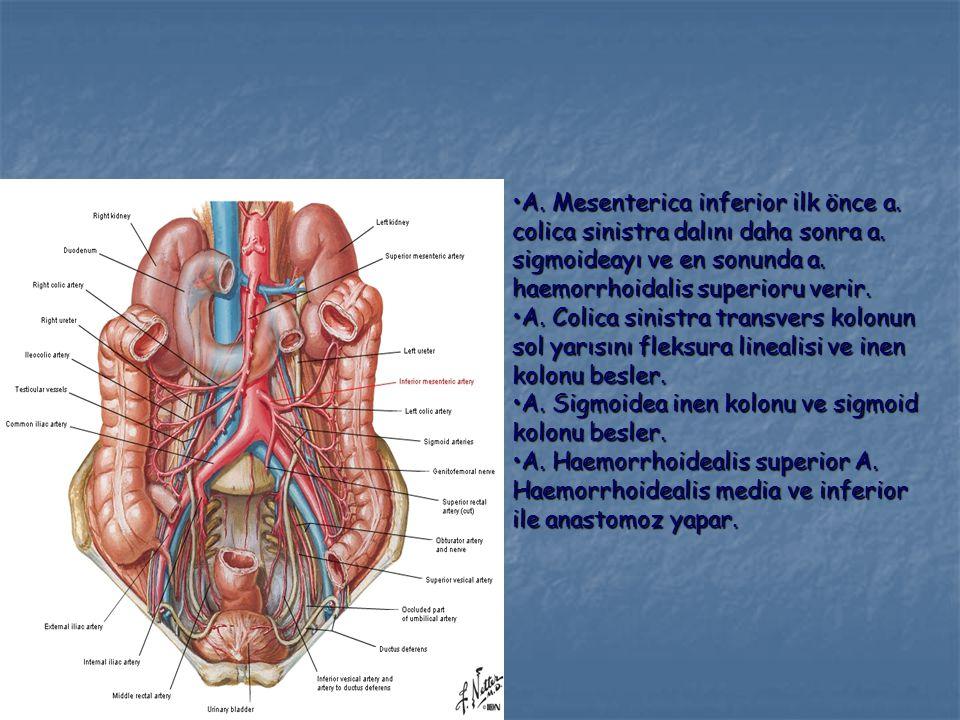 A. Mesenterica inferior ilk önce a. colica sinistra dalını daha sonra a. sigmoideayı ve en sonunda a. haemorrhoidalis superioru verir.A. Mesenterica i