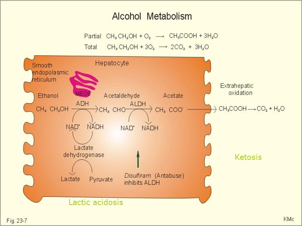 ETANOL METABOLİZMASI: Etanol karbohidratların (pentozlar,oligo ve polisakkaritler hariç) bir fermantasyon ürünüdür. C 6 H 12 O 6 2 C 2 H 5 OH + 2 CO 2