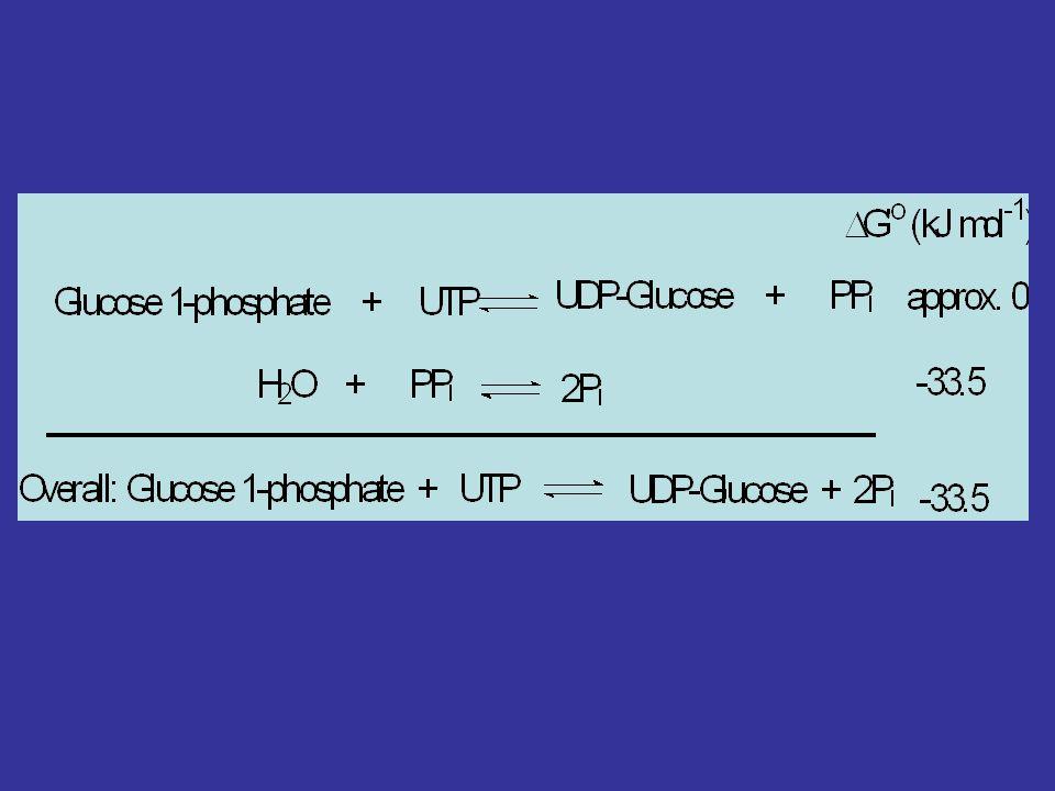 UDP-Glu Pirofosforilaz Pirofosfataz aracılığı İle ayrışan Pi reaksiyonu Tersinmez yapmaktadır. UDP-glu memelilerde glukoz vericisidir. (Glikolipid, gl
