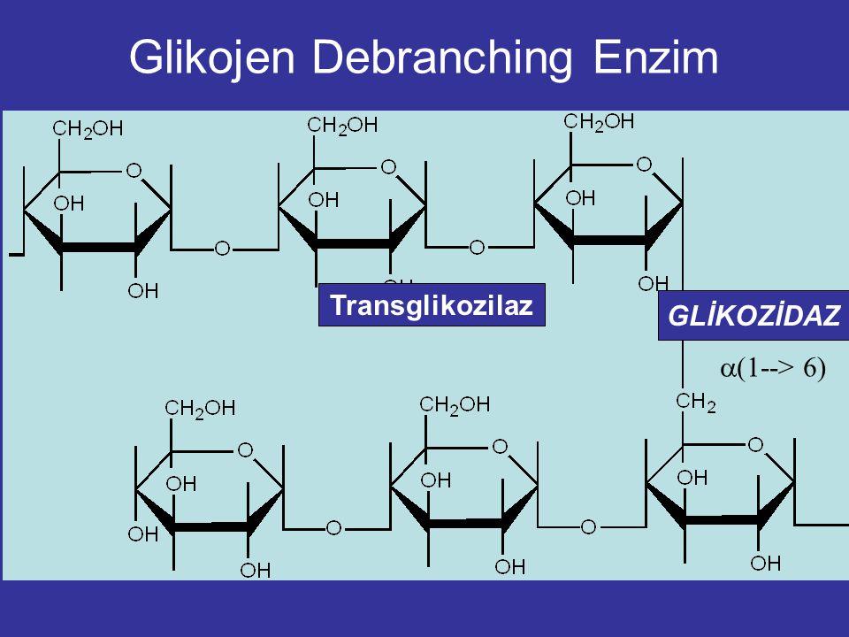 Glikojen fosforilaz homodimerik bir yapıda allosterik enzimdir. İnsan kc Glikojen Fosforilaz hiperglisemi tedavisinde kullanılan ilaçlar (kloroindol-