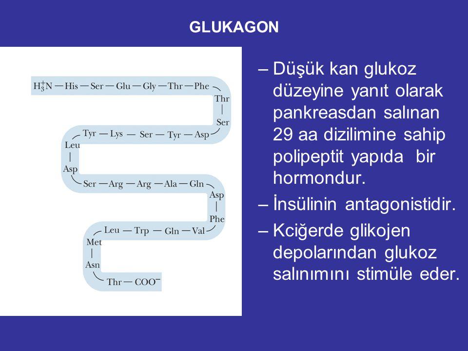 Glikojen sentez ve yıkımının hormonal kontrolü Kas kasılımı ve beyin fonksiyonları için kan glukoz konsantrasyonunu 5 mM olmalıdır.Bu da bir çok hormo