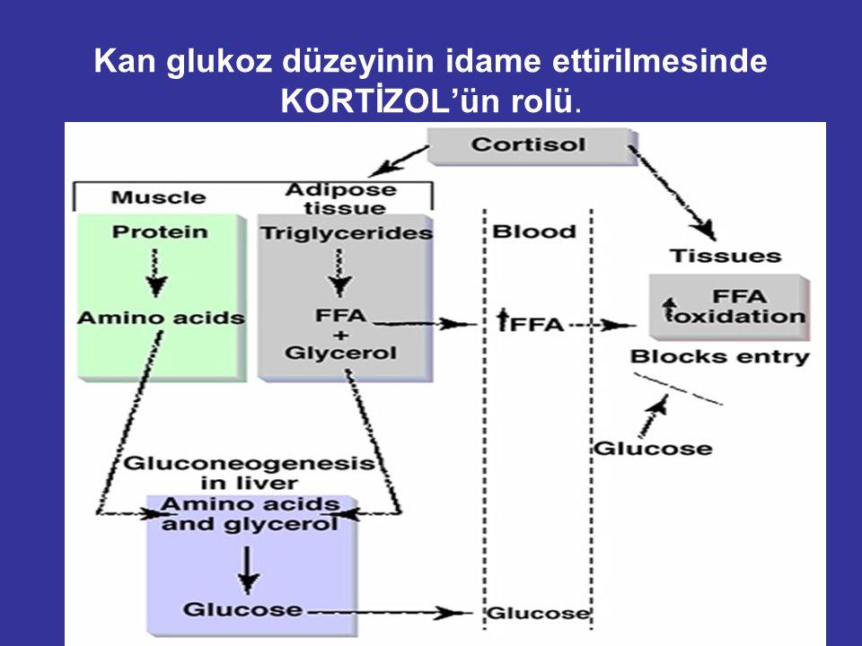 Plazma glukoz düzeyinin idame ettirilmesinde Growth Hormonun etkisi : –Glukoz alımı azaldığında. – FFA mobilizasyonu artığında –Glukoneojenez' i artır