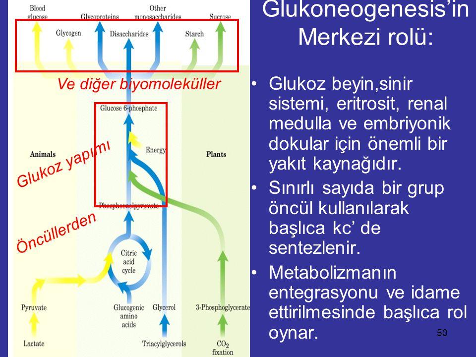 """GLİKONEOGENEZ Perhiz ve açlık süresince, hepatik glikojen yetersizliğinde kan glukoz düzeyinin idame ettirilmesinde """"GLİKONEOGENEZİS"""" temel rol oynar."""