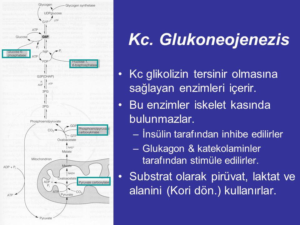 Laktik Asidozis: Kliniksel önemi TiP A (Yaygın) Azalmış doku perfüzyonu: ör. Şok (hemorajik,kardiojenik), Sol ventricular yetmezlik Primer defekt: Dok