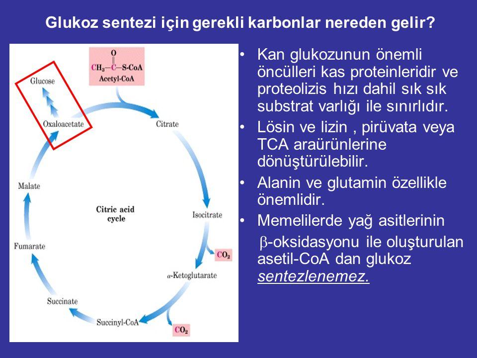 Amino Asidlerden Glukoz Sentezi Karaciğer ve iskelet kası amino asit havuzuna sahiptir. Alanin glukoneogenezis de kullanılan primer aa. Alanine kastan