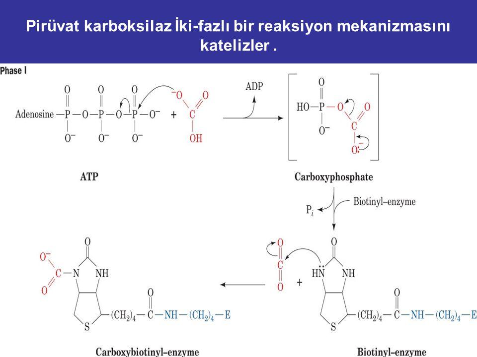 Reaksiyon substrat olarak ATP ve bikarbonat gereksinir. Acetyl-CoA allosterik aktivatörüdür. Regulation: ATP veya asetil-CoA yükseldiğinde, pirüvat gl